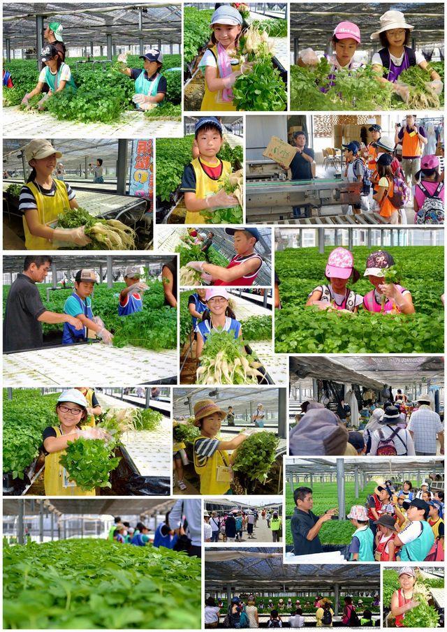 2015年の大久保園芸の様子(その2)